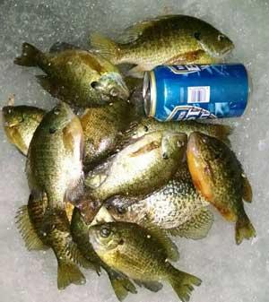 Hamlin lake archive hamlin lake fishing reports for Michigan fish limits